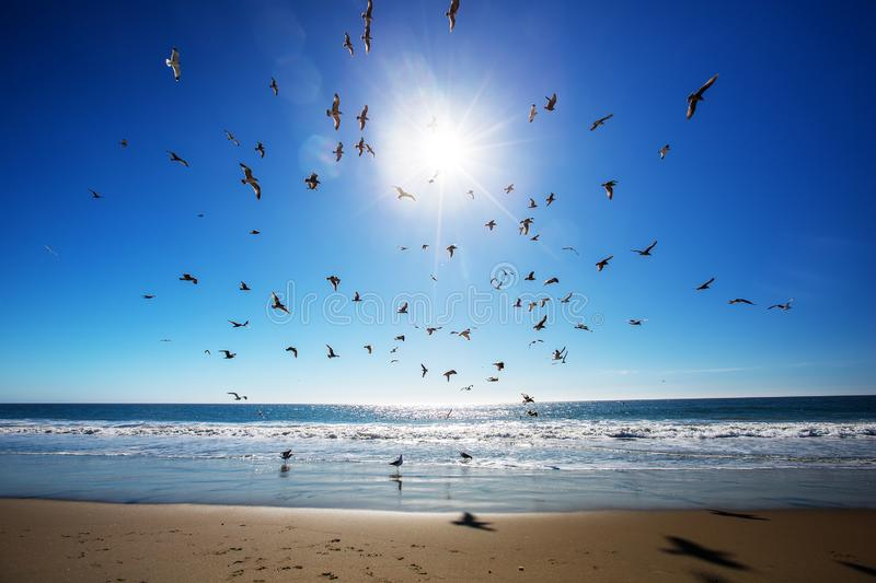Beautiful view of the ocean with seagulls.  royalty free stock images