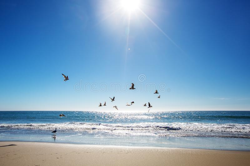 Beautiful view of the ocean with seagulls.  stock images