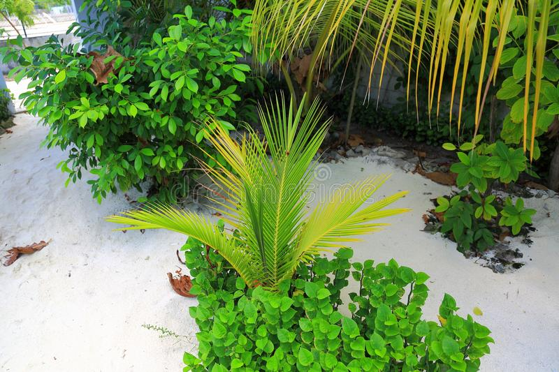 Beautiful view on pice of private garden. Juicy green plants on white sand background royalty free stock photo
