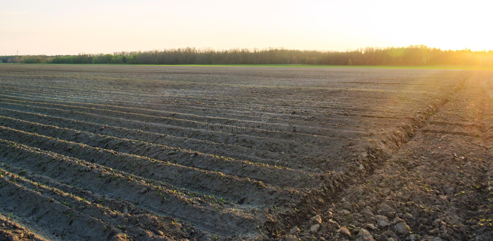 Beautiful view of the plowed field on a sunny day. Preparation for planting vegetables. Agriculture. Farmland. Soft selective royalty free stock photos