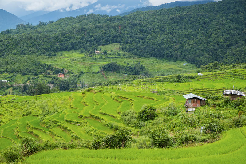 Beautiful view of rice fields and farm traditional houses, Bhutan. Photo taken on: August 12th, 2015 stock photography