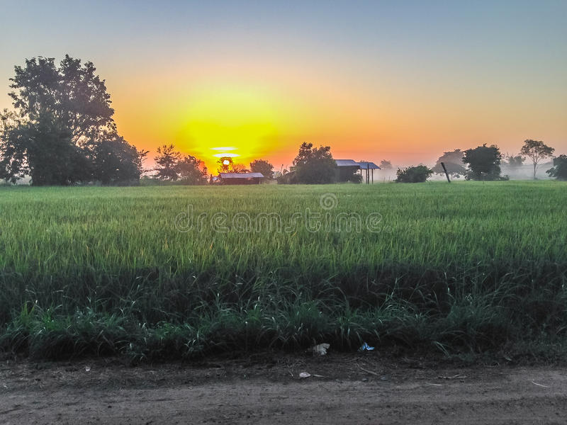 Beautiful view of rice paddy field during sunrise, cloudy and bl. Ue sky in the morning royalty free stock images