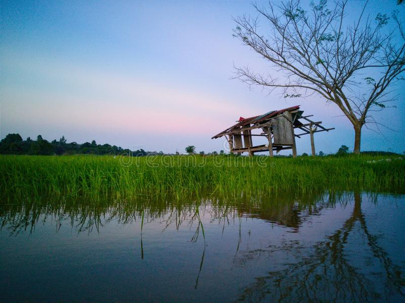 Beautiful view of rice paddy field during sunset in Malaysia. Nature composition. Beautiful view rice paddy field sunset malaysia nature composition stock images
