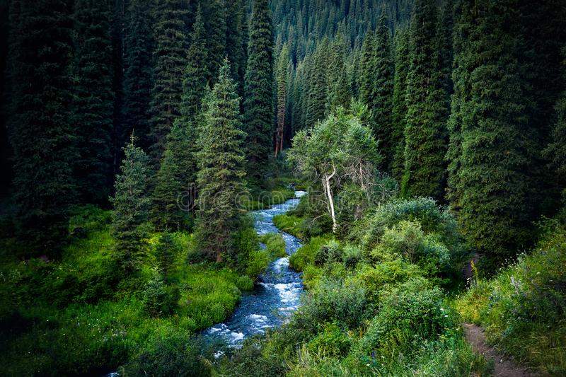 Beautiful scenic of Mountain Forest stock photo