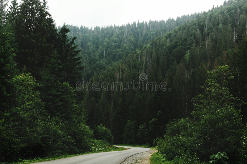 Beautiful view of road among trees in forest light, moody atmospheric moment, summer travel concept, exploring world, space for t. Ext royalty free stock image