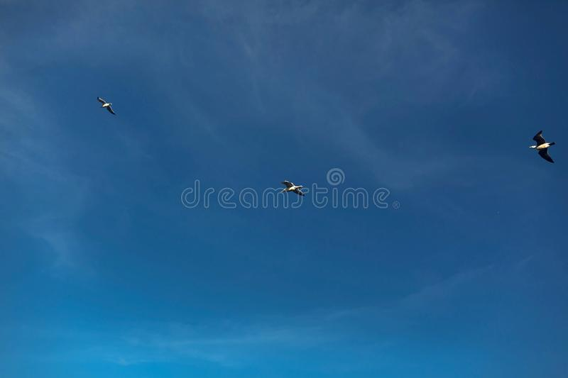Beautiful view of seagulls flying in blue sky at sea. Birds soaring in sunny, atmospheric moment. View from ground royalty free stock image