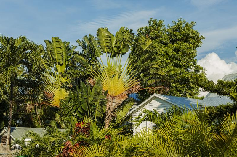 Beautiful view of small houses surrounded of green palm trees and plants. Key West. Florida. stock photos