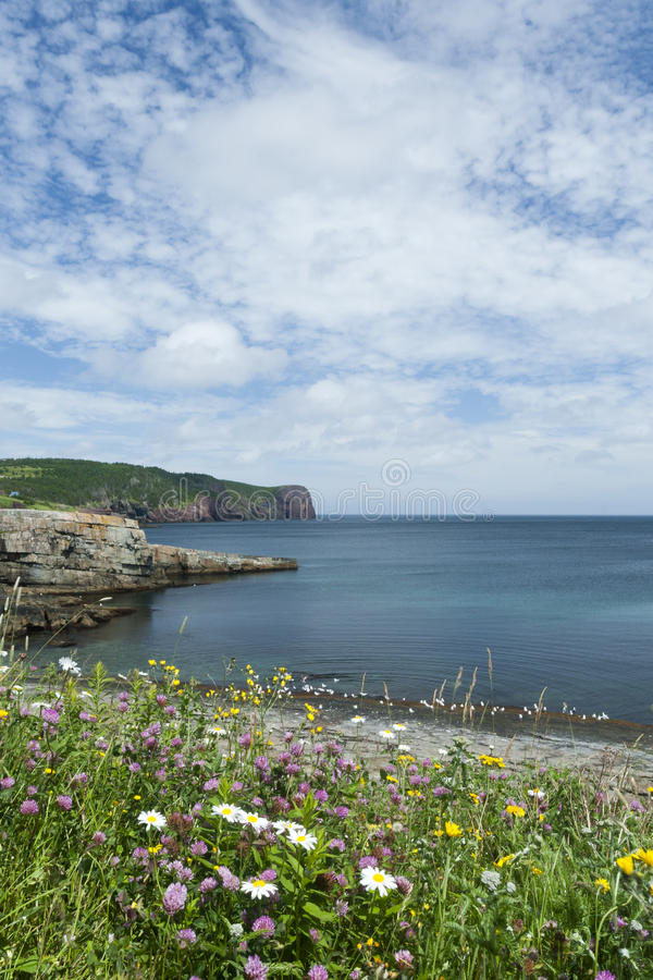 Beautiful view of St. John's Peninsula in Newfoundland and Labra. Wildflowers in foreground of coastal view of St. John's peninsula in Canadian stock photos