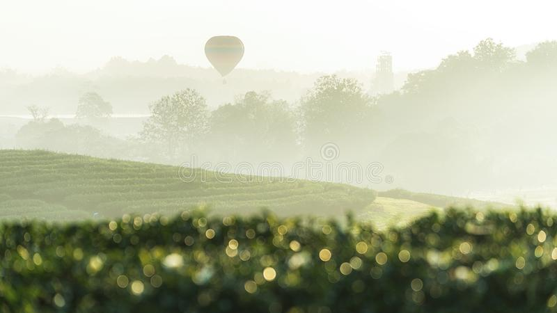 View of beautiful tea plantation with a hot air balloon in morning time at Chiangrai, Thailand. Beautiful view of beautiful tea plantation with a hot air stock photography