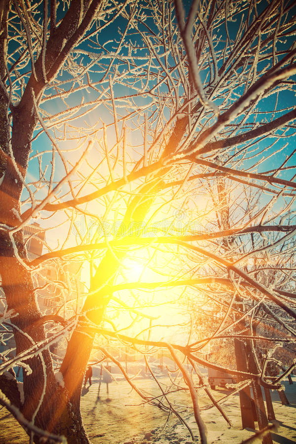 beautiful view trough crone of frosted tree on sun instagram stile stock photos