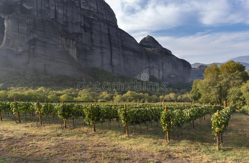Beautiful view of the vineyards in Meteora, Greece. Meteora rock formation and monastery complex royalty free stock photo