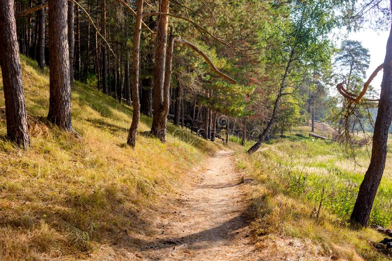 Beautiful view of the walking path in the middle of the pine forest on the slope stock image