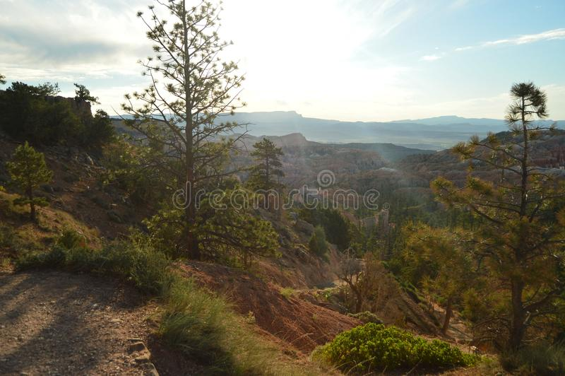 Beautiful Views From The Highest Point In Bryce Canyon. Firs and Geological Formations. Geology. Travel.Nature. stock image