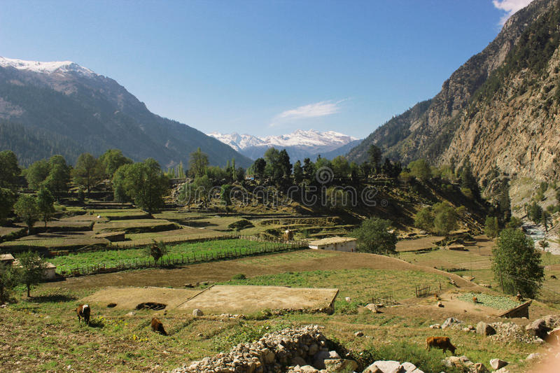 Beautiful village in the mountains with blue skys. Pure green fields and trees in swat valley kpk Pakistan stock images