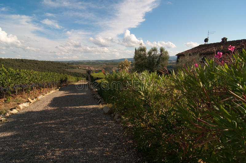 Beautiful vineyard in Italy royalty free stock photos