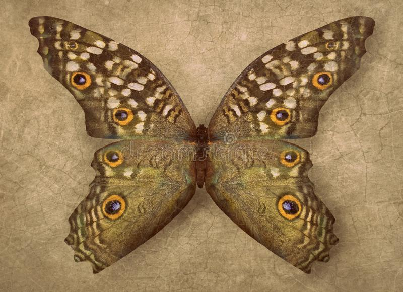 Beautiful vintage butterfly display texture background royalty free stock photo