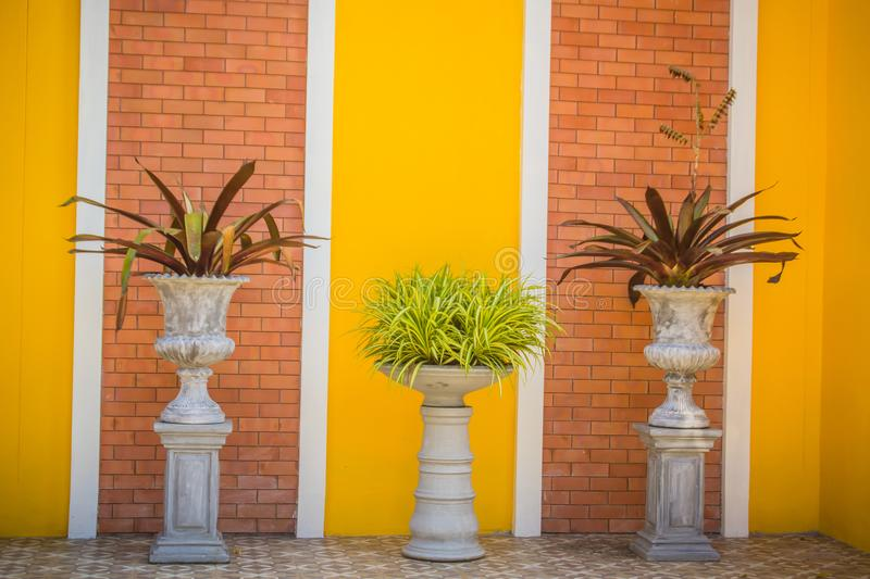Beautiful vintage flower pot on the yellow brick wall background with copy space. Clean plastered brick wall and yellow painting w royalty free stock image