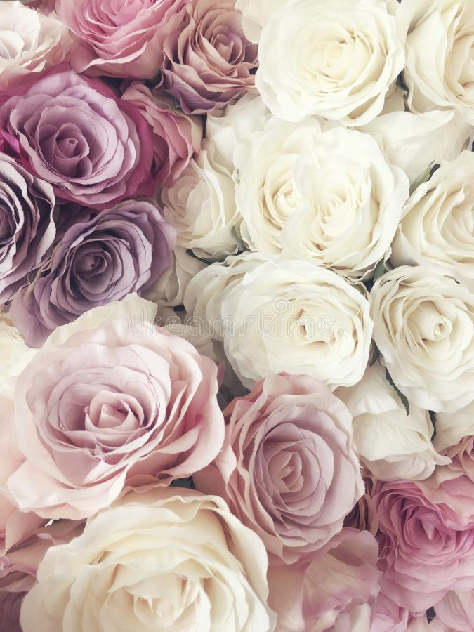 Free Beautiful Vintage Rose Background. White, Pink, Purple, Violet, Cream Color Bouquet Flower. Elegant Style Floral. Royalty Free Stock Photo - 92680105