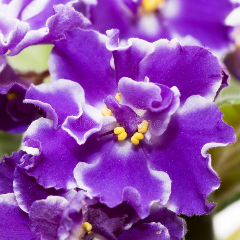 Beautiful violet stock photos