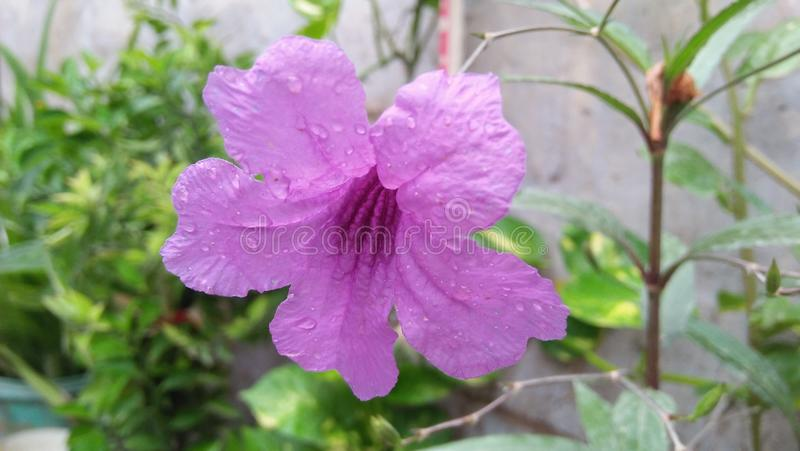 Beautiful violet color flower stock photo