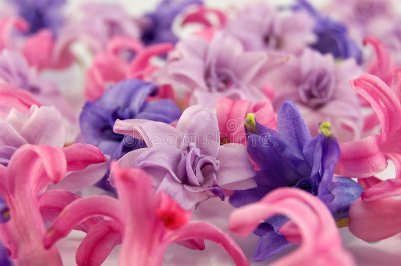 Beautiful violet flowers stock photography