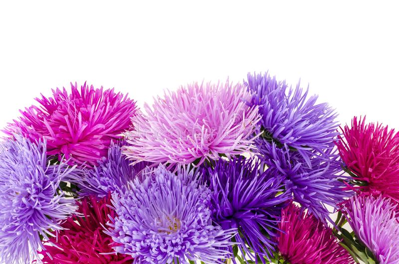 Three violet asters stock image. Image of petals, stems