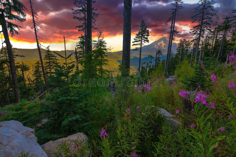 Beautiful Vista of Mount Hood in Oregon, USA. stock photos