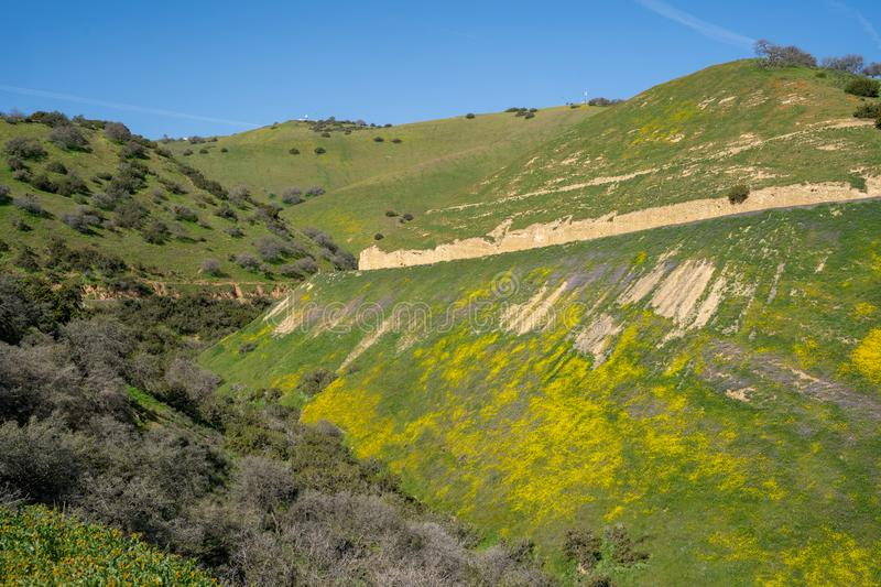 Beautiful vista of wildflowers, rolling hills and the San Andreas Fault along Highway 58 near Carrizo Plain National Monument in. Spring stock photo