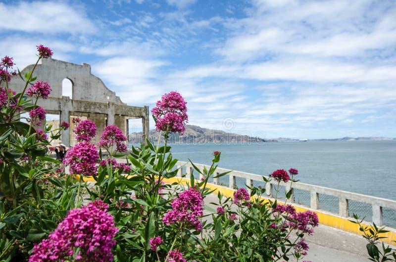 Beautiful vivid flower garden scenery on Alcatraz Island in San Francisco, California stock photography