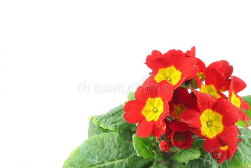 Beautiful vivid flowers with copyspace royalty free stock photography