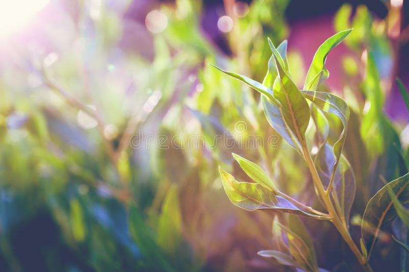 Beautiful vivid foliage glowing in sunlight royalty free stock photography