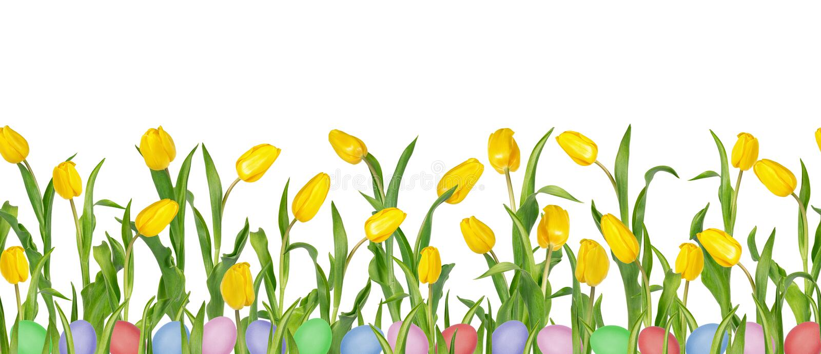 Beautiful vivid yellow tulips on long stems with green leaves and colorful Easter eggs in seamless pattern. royalty free stock image