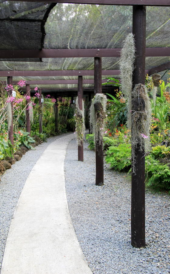Beautiful walkway with exotic orchids, Garden of the Sleeping Giant,Fiji,2015. Pretty scene with long,covered walkway showcasing exotic orchids on display,Garden stock photography