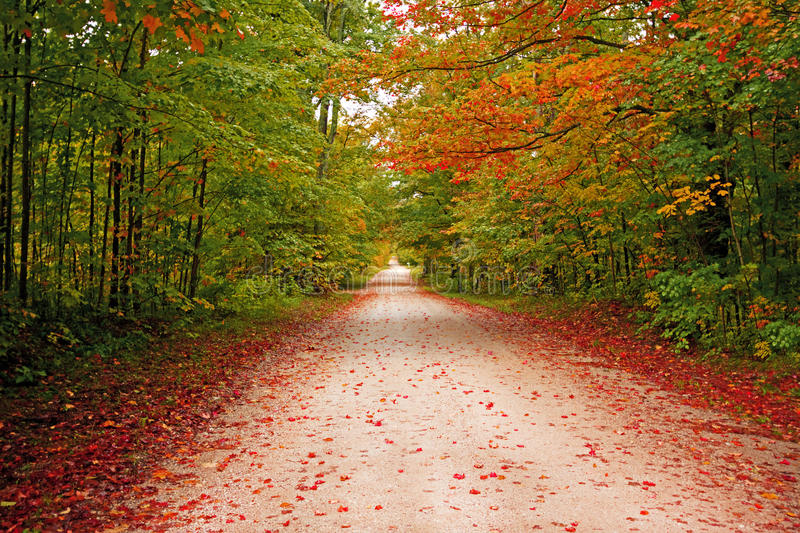 Beautiful walkway in with fall colors in Michigan royalty free stock images