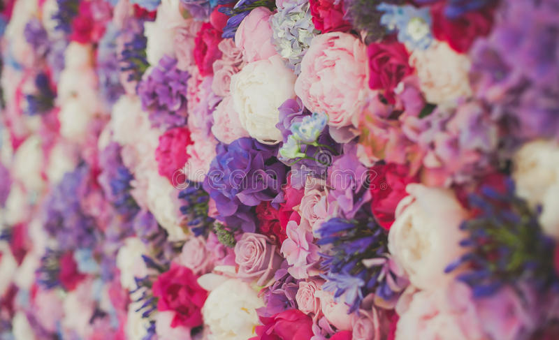 Beautiful wall made of red violet purple flowers, roses, tulips, press-wall, background royalty free stock photography