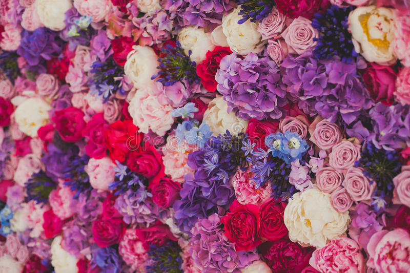 Beautiful wall made of red violet purple flowers, roses, tulips, press-wall, background stock photos