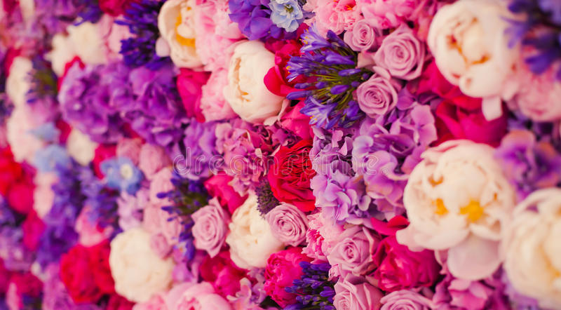 Beautiful wall made of red violet purple flowers, roses, tulips, press-wall, background stock photo