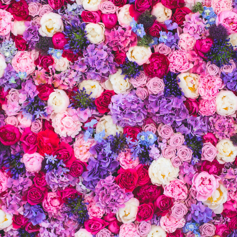Beautiful wall made of red violet purple flowers, roses, tulips, press-wall, background royalty free stock image