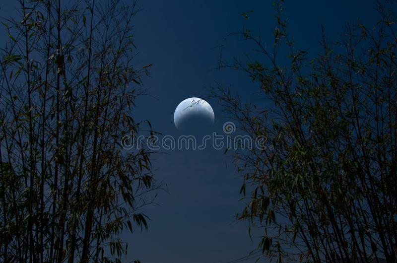 Waning moon with bamboo forest in crescent night royalty free stock photo