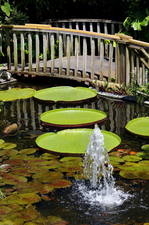 Free Beautiful Water Lily Garden With Bridge Royalty Free Stock Photography - 26261957