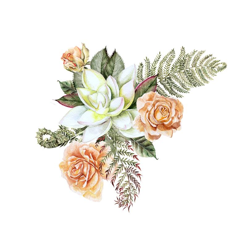 A beautiful watercolor bouquet with rose and succulent. With leaves and fern. Illustration royalty free illustration