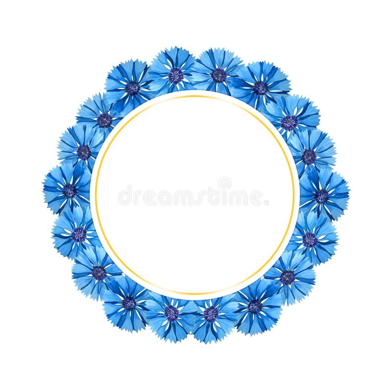 Beautiful watercolor card with cornflowers. Flowers isolated on white background. vector illustration
