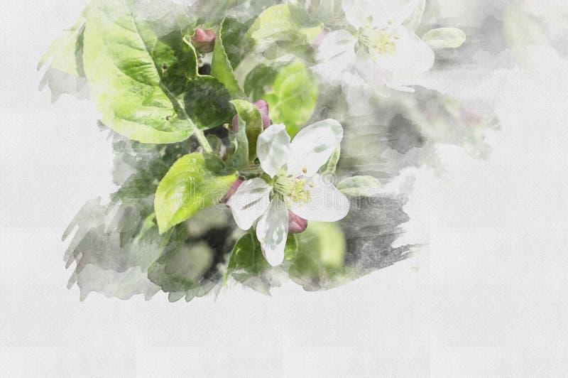 Beautiful watercolor flower. Illustration Spring. royalty free illustration