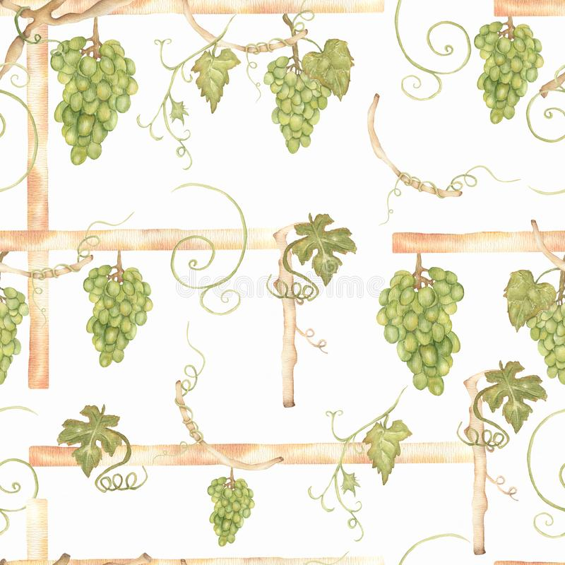 Beautiful watercolor hand drawn seamless green and yellow pattern with grapes branches and leaves.  Isolated on white background. Perfect for your design royalty free illustration