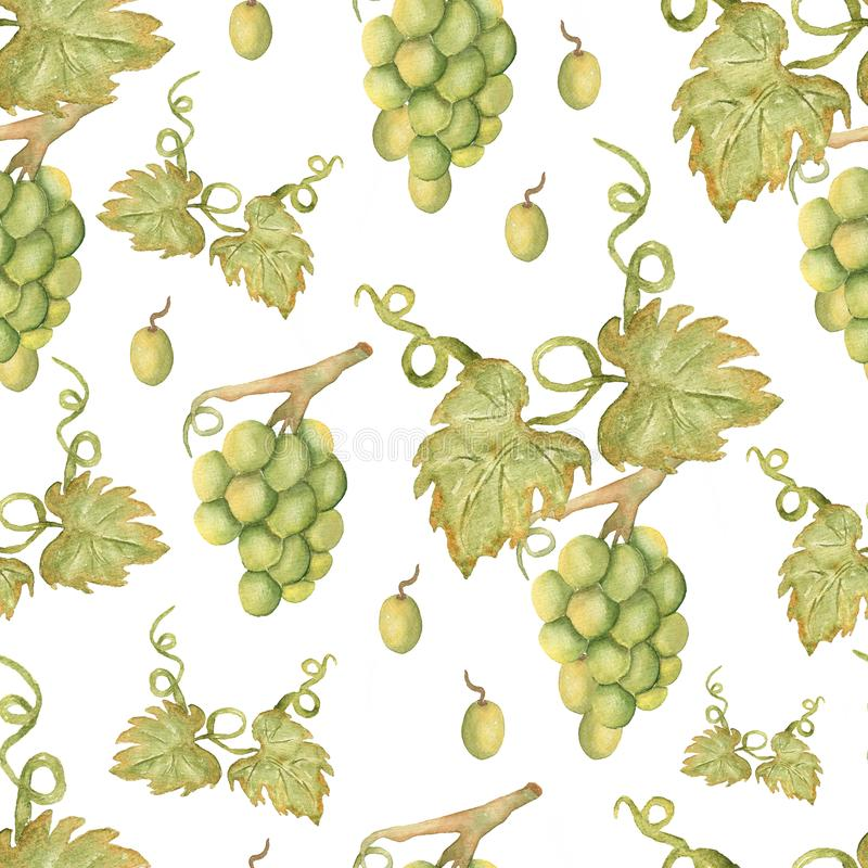 Beautiful watercolor hand drawn seamless green and yellow pattern with grapes branches and leaves.  Isolated on white background. Perfect for your design vector illustration