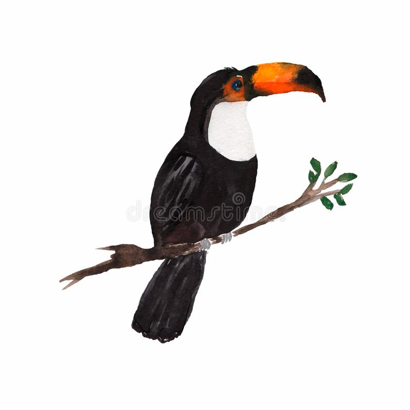 Beautiful watercolor illustration of toucan sitting on the branch isolated on white.Black bird with oranch peak.exotic bird. One Bird with Big beak, Toucan bird royalty free illustration