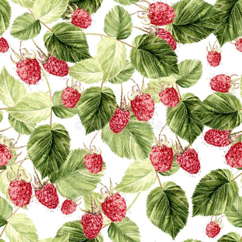 Beautiful Watercolor Raspberry Seamless Pattern. royalty free stock image