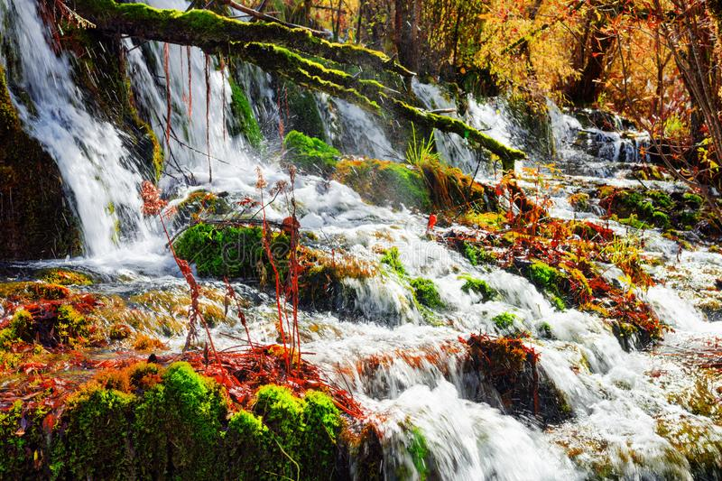Beautiful waterfall with crystal clear water among fall woods. In Jiuzhaigou nature reserve (Jiuzhai Valley National Park) of Sichuan province, China. Scenic royalty free stock photography