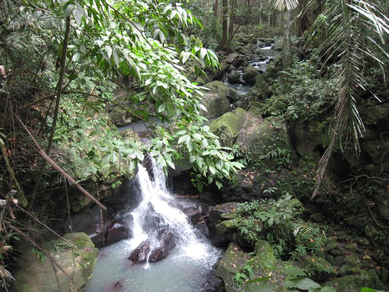 A waterfall in the forest at Makiling botanical gardens, Philippines stock photo