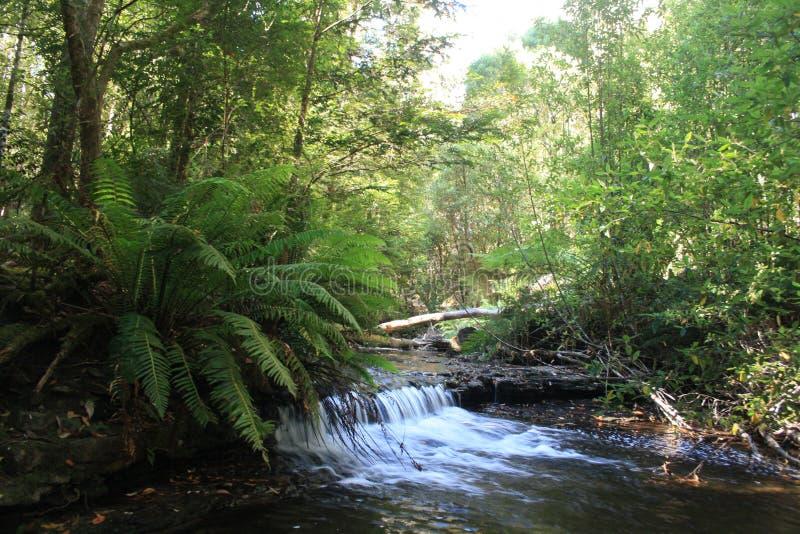 Cascade and fern Tasmania stock image